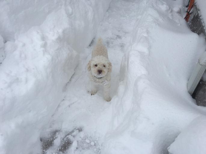 Anthony Beyer Snow Storm