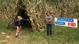 Corn tunnels with Mason!